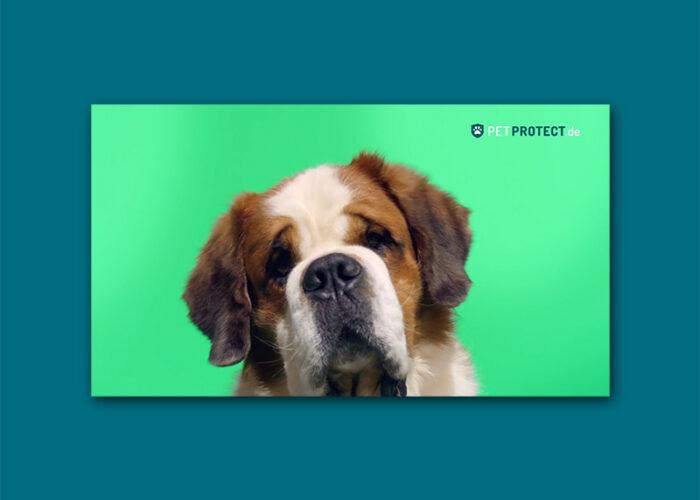 Petprotect – Big&Small